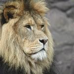 ライオン 2