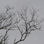 dead-branches-1115482__340