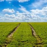 grass-316667__340