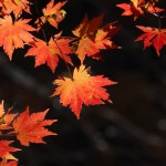 autumn-leaves-3780623_1920