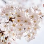 4月29日(祝土)は通常営業いたします。
