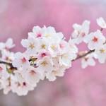 4月30日(月)営業時間について(祝日営業)