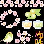 日本全国の梅酒を飲みまくる
