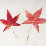 上野恩賜公園 -秋の紅葉2020-